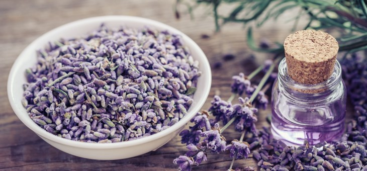 Herbs And Oils For Gum Healing and Health
